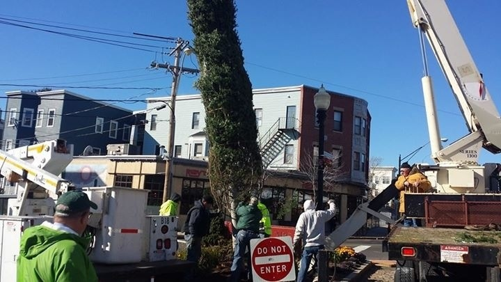 Somerville Holiday Christmas Trees Going Up In City